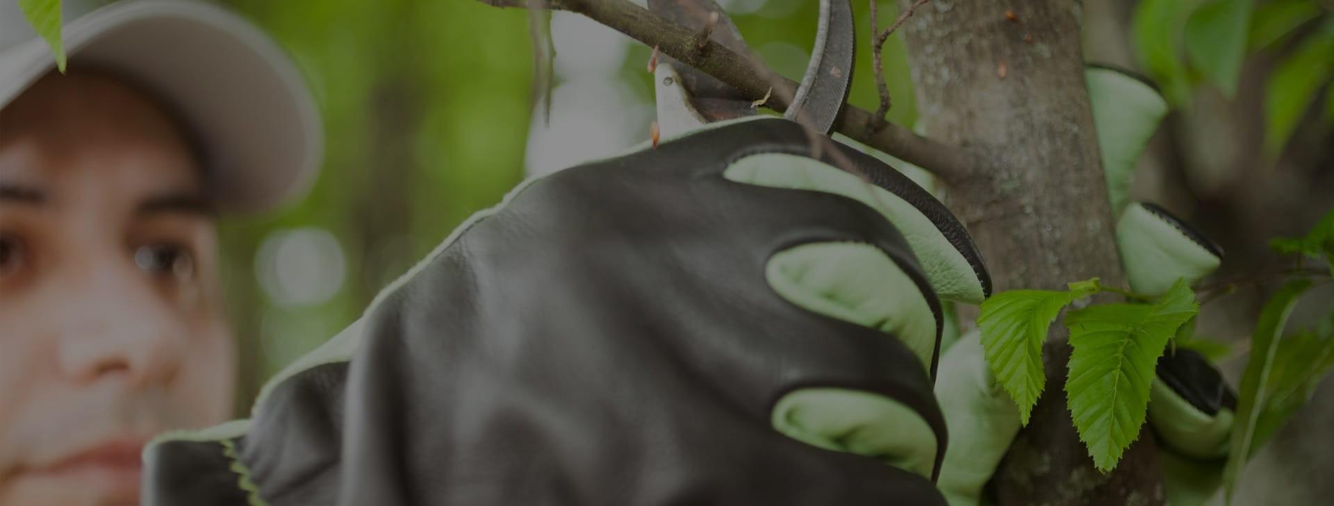 Wij modelleren en ontwerpen uw tuin op uw smaak